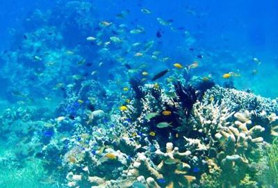 菲律宾薄荷岛海底世界