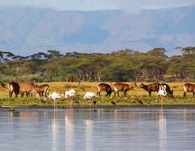 肯尼亚八天游:肯尼亚纳瓦沙湖