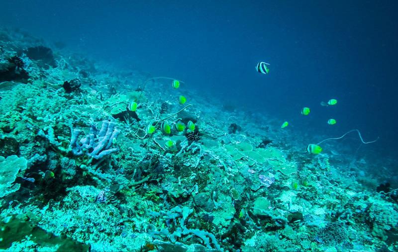 巴厘岛潜水观赏美丽珊瑚礁