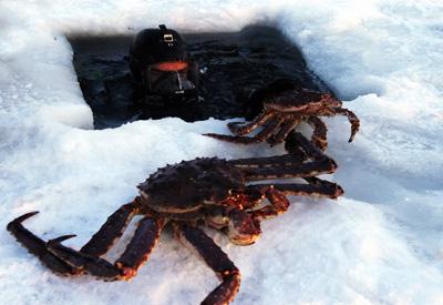北欧三国11天之旅景点_挪威捕捞帝王蟹
