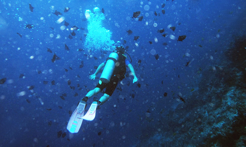 在沙巴潜水
