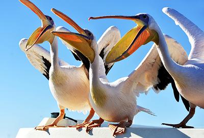 纳米比亚11天旅游景点_纳米比亚鹈鹕岬