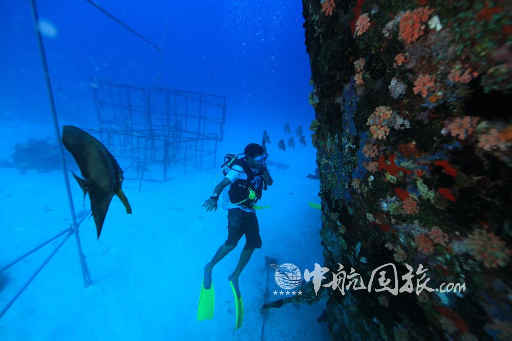 马尔代夫潜水攻略:潜水缤纷海底,和热带鱼悠游