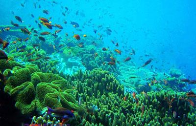 美娜多六天游_印尼美娜多布纳肯海洋生态保护区