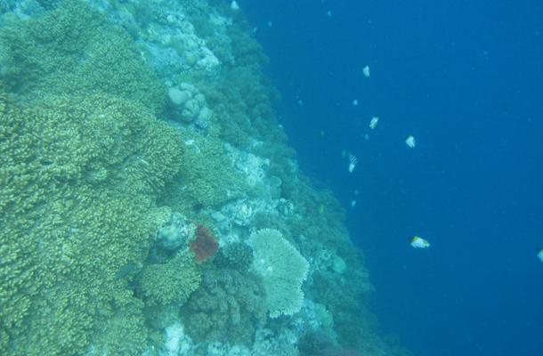 帕劳群岛珊瑚礁海底世界