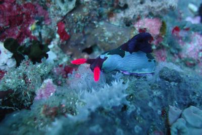 菲律宾海豚湾五天游_菲律宾海豚湾-菲律宾海豚湾海底